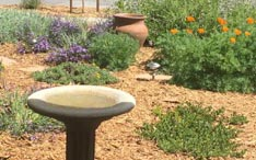 garden scene: birdbath, poppies, clumps of blooming shrubs, newly planted with room to grow