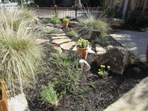 Garden stepping stone path around bunch grass, shrubs and buckwheat