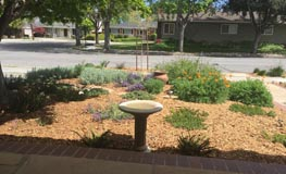 Front yard with flowering shrubs and birdbath