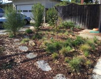 Front yard with bunchgrass, shrubs and stepping stones