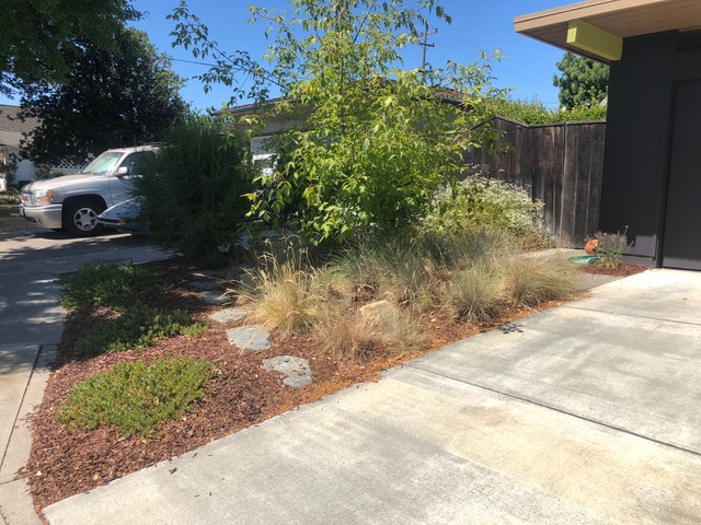Click to enlarge image piper1cn-driveway-shrub.jpg