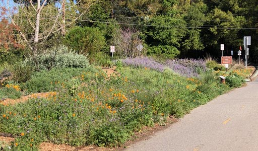 garden in bloom, bordered by trees behind and bike/pedestrian path in front